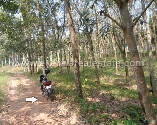 Chenkottukonam land with rubber for sale trivandrum kerala real estate