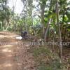 agriculture land sale at Neyyattinkara trivandrum kerala real estate