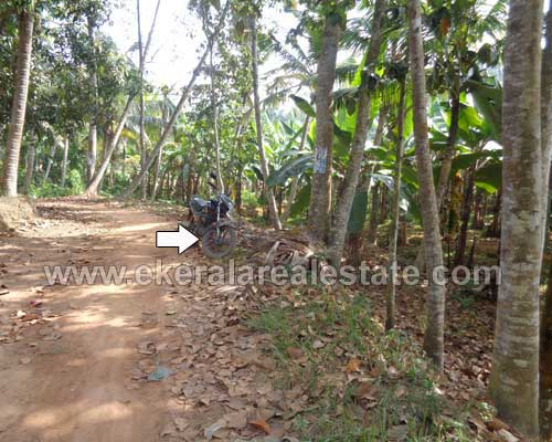 agriculture land sale at Neyyattinkara trivandrum kerala real estate