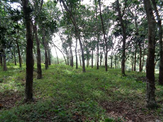 Trivandrum Njandoorkonam near Sreekaryam 12 acres land for sale