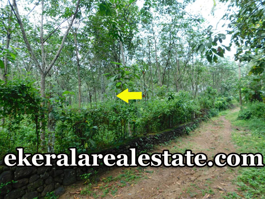 1.20-Acre-Rubber-Land-sale-in-Nedumangad